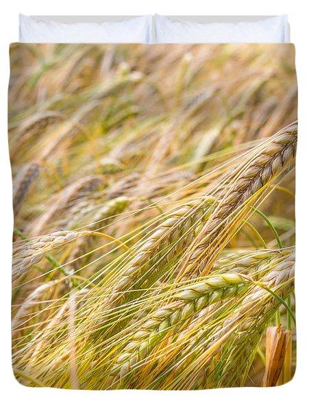 Golden Barley. Duvet Cover