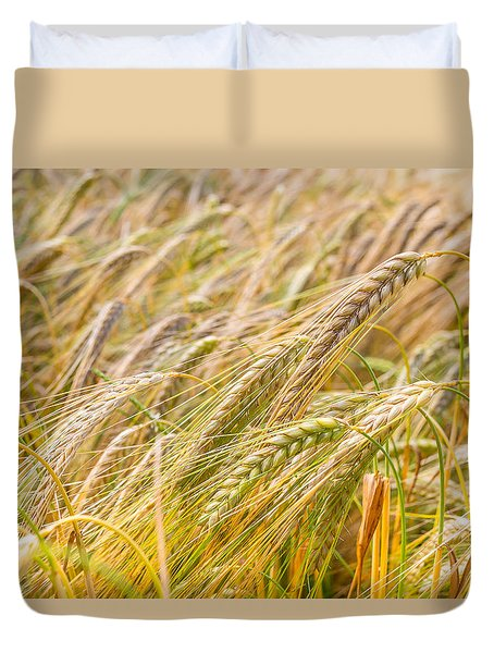 Duvet Cover featuring the photograph Golden Barley. by Gary Gillette