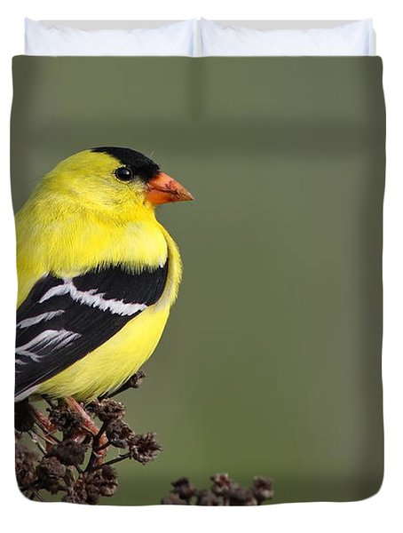 Golden Bird Duvet Cover by Mircea Costina Photography