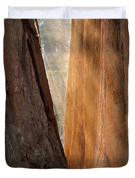Golden Sequoia Duvet Cover