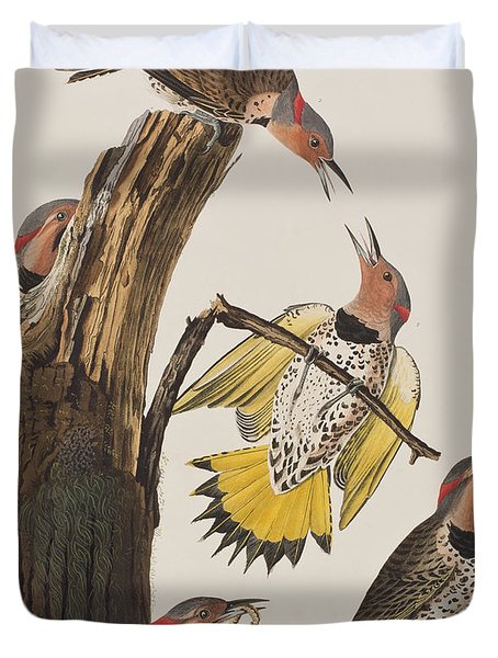 Golden-winged Woodpecker Duvet Cover by John James Audubon
