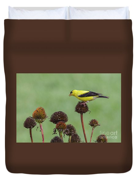 Goldfinch And Coneflowers Duvet Cover