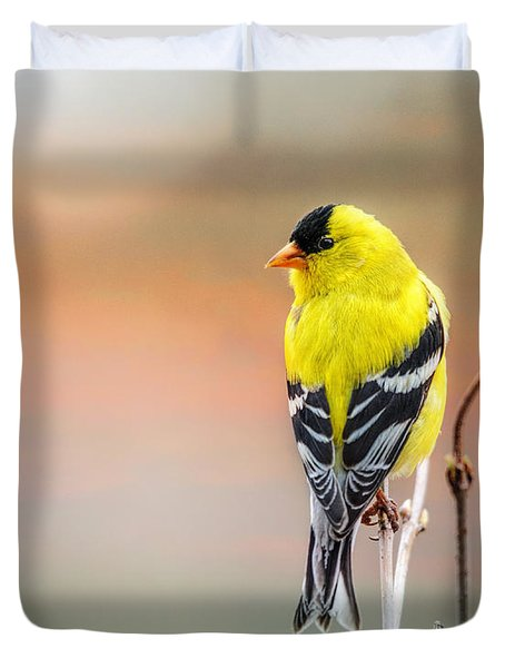 Goldfinch At Sunrise Duvet Cover by Susan Capuano