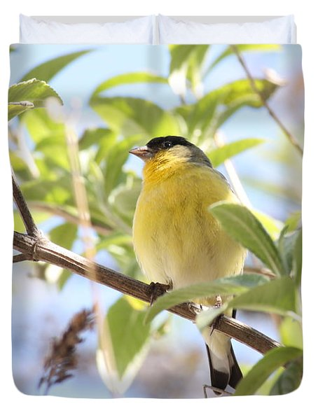 Goldfinch In Spring Tree Duvet Cover by Carol Groenen