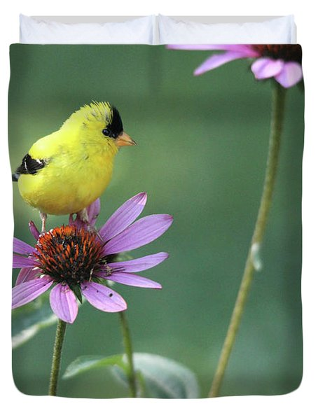 Goldfinch On A Coneflower Duvet Cover