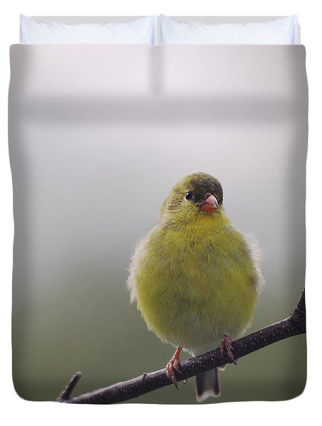 Duvet Cover featuring the photograph Goldfinch Puffball by Susan Capuano