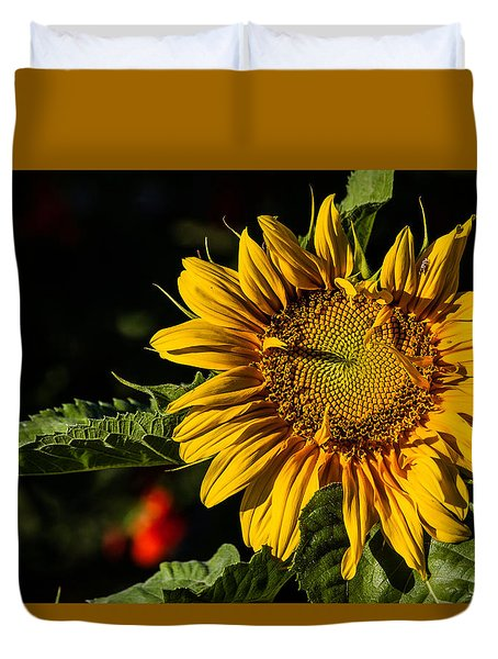 Good Morning Duvet Cover by Alana Thrower