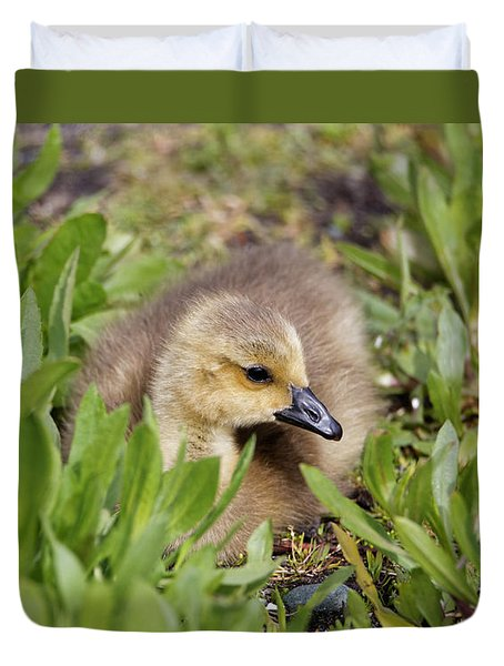 Duvet Cover featuring the photograph Gosling In The Green by Sue Harper