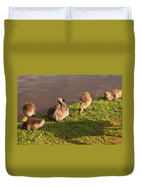 Duvet Cover featuring the photograph Goslings Basking In The Sunset by Chris Flees