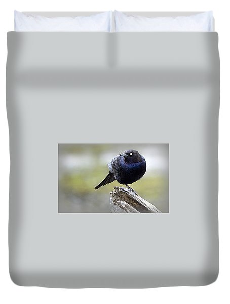 Grackle Resting Duvet Cover