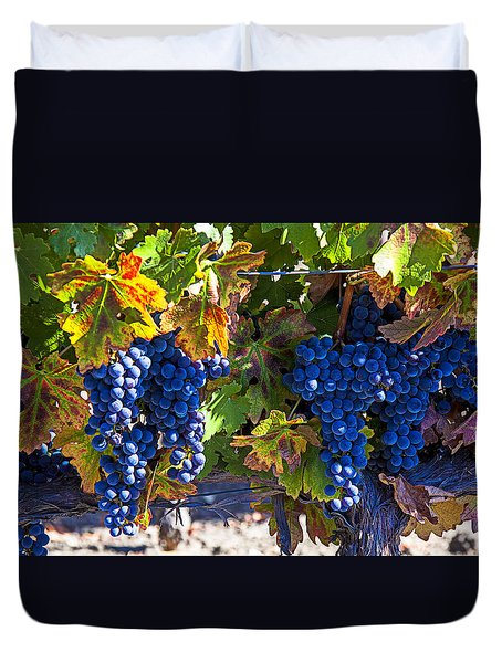 Grapes Ready For Harvest Duvet Cover by Garry Gay