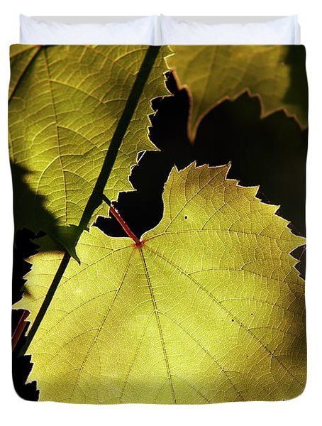 Grapevine In The Back Lighting Duvet Cover by Michal Boubin