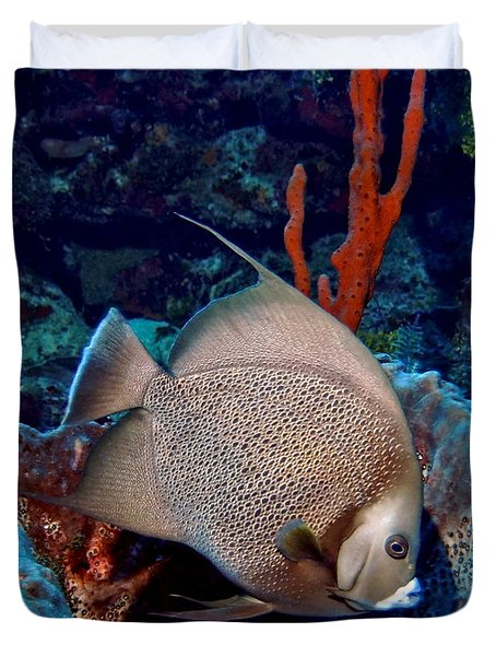Duvet Cover featuring the photograph Gray Angel Fish And Sponge by Amy McDaniel