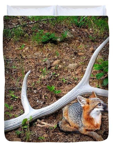 Gray Fox And Elk Antler Duvet Cover