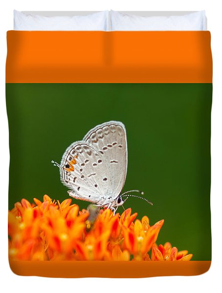 Duvet Cover featuring the photograph Gray Hairstreak On Green And Orange by Lara Ellis