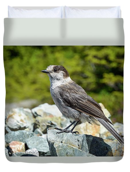 Gray Jay, Canada's National Bird Duvet Cover