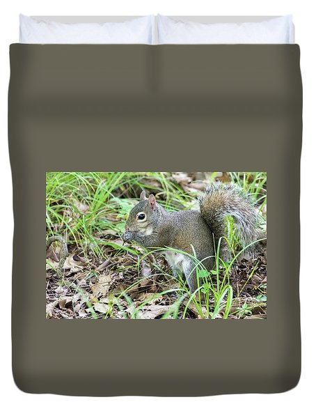 Gray Squirrel Eating Duvet Cover