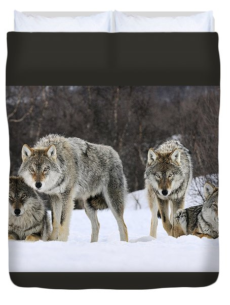 Duvet Cover featuring the photograph Gray Wolves Norway by Jasper Doest