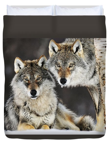 Duvet Cover featuring the photograph Gray Wolf Canis Lupus Pair In The Snow by Jasper Doest