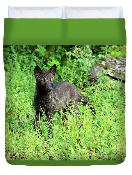Gray Wolf Pup Duvet Cover by Louise Heusinkveld