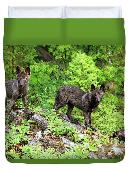 Gray Wolf Pups Duvet Cover by Louise Heusinkveld