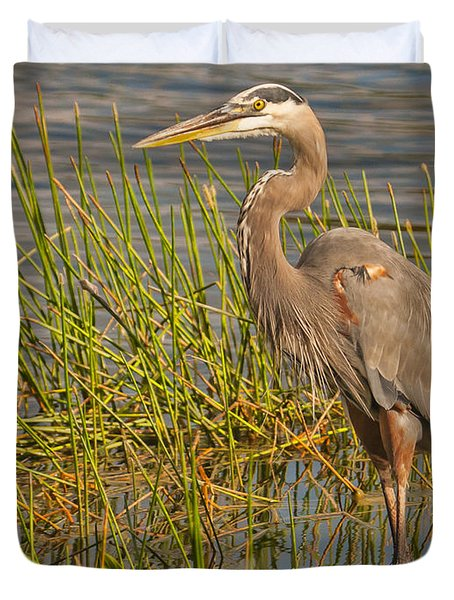 Great Blue At The Park Duvet Cover by Don Durfee