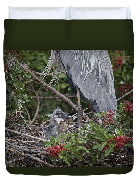 Great Blue Heron Nestling Duvet Cover