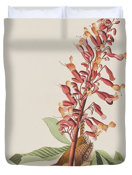 Great Carolina Wren Duvet Cover by John James Audubon