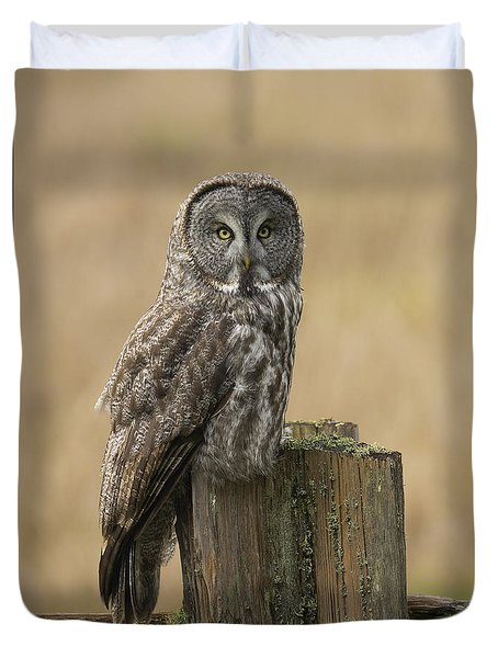 Great Gray Owl Duvet Cover by Doug Herr