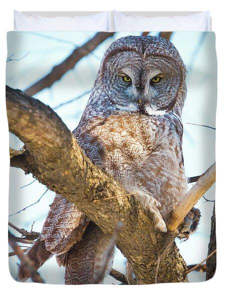 Great Gray Owl Duvet Cover