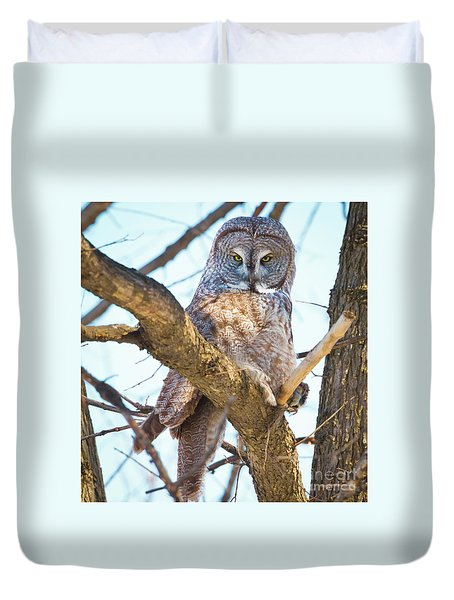 Great Gray Owl Duvet Cover by Ricky L Jones