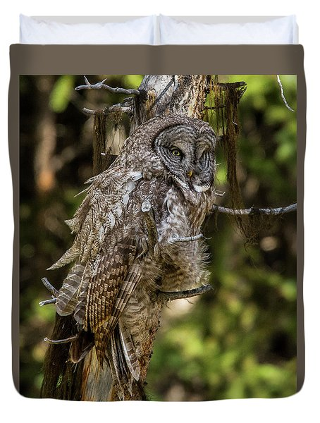Great Grey Owl In Windy Spring Duvet Cover by Yeates Photography