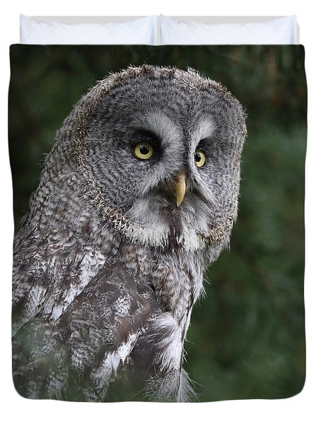 Great Grey Owl Duvet Cover