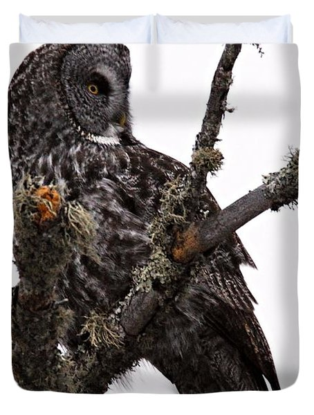 Great Grey Owl Duvet Cover by Larry Ricker