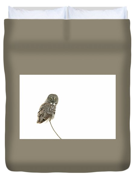 Duvet Cover featuring the photograph Great Grey Owl On White by Mircea Costina Photography