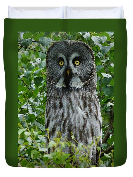 Great Grey Owl - Surprised Duvet Cover