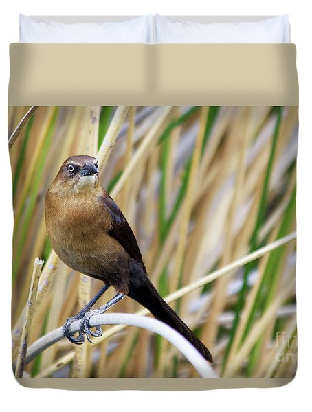 Great-tailed Grackle Duvet Cover by Afrodita Ellerman