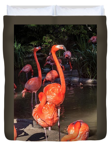 Greater Flamingo Duvet Cover
