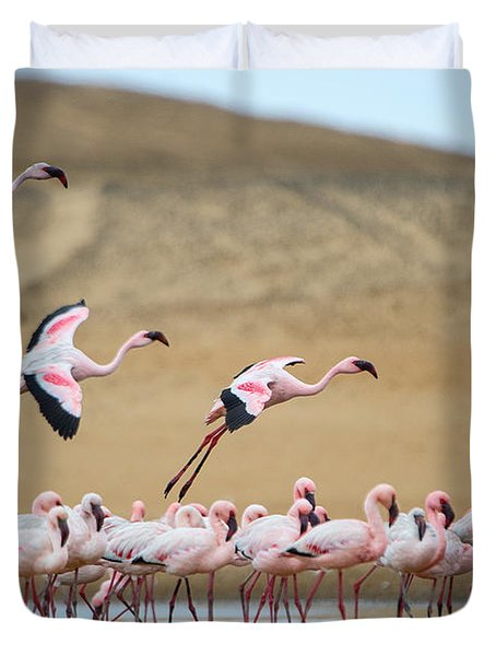 Greater Flamingos Phoenicopterus Duvet Cover