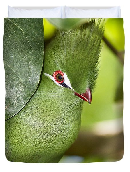Green Turaco Bird Portrait Duvet Cover
