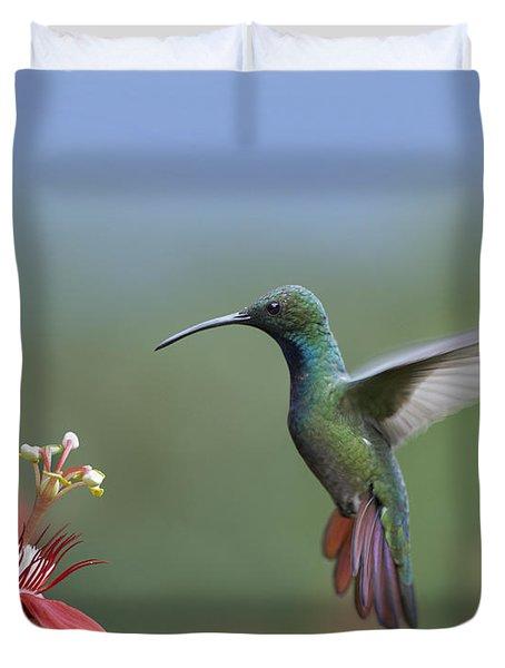Green Breasted Mango Hummingbird Male Duvet Cover by Tim Fitzharris