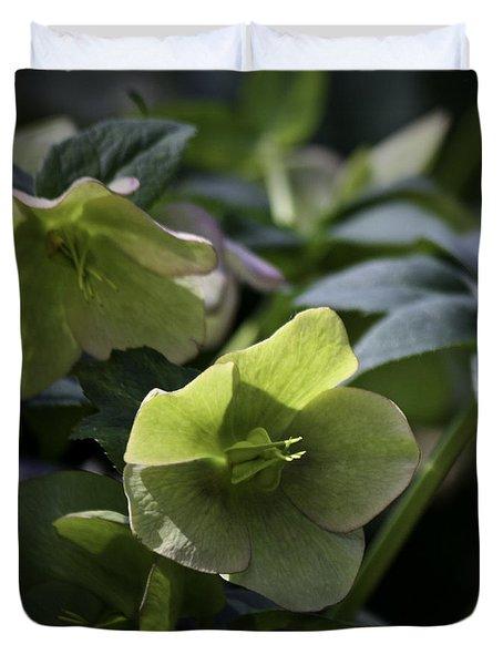 Green Hellebore Squared Duvet Cover by Teresa Mucha