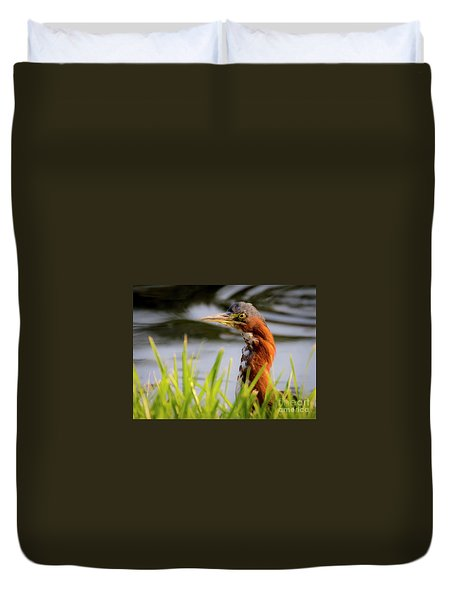 Green Heron Closeup  Duvet Cover