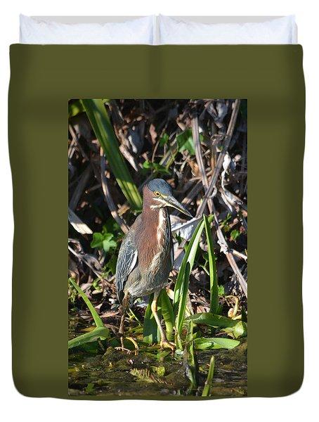 Green Heron Everglades Duvet Cover