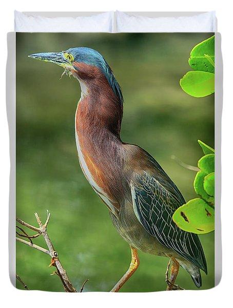 Duvet Cover featuring the photograph Green Heron Pose by Deborah Benoit