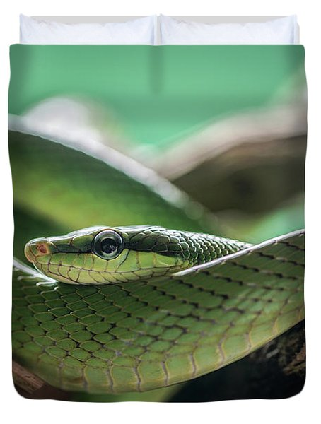 Green Snake On The Branch Duvet Cover