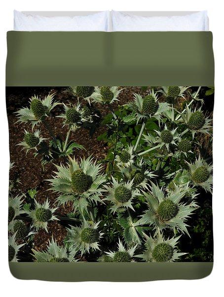 Green Thistles In Botanical Garden Of Bern Duvet Cover