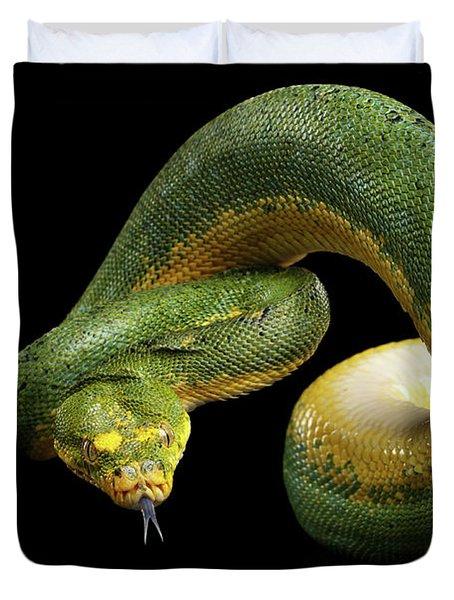 Green Tree Python. Morelia Viridis. Isolated Black Background Duvet Cover