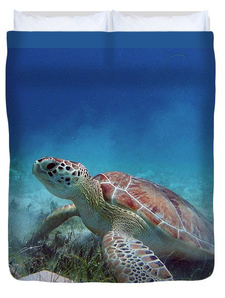 Green Turtle Duvet Cover by Kimberly Mohlenhoff