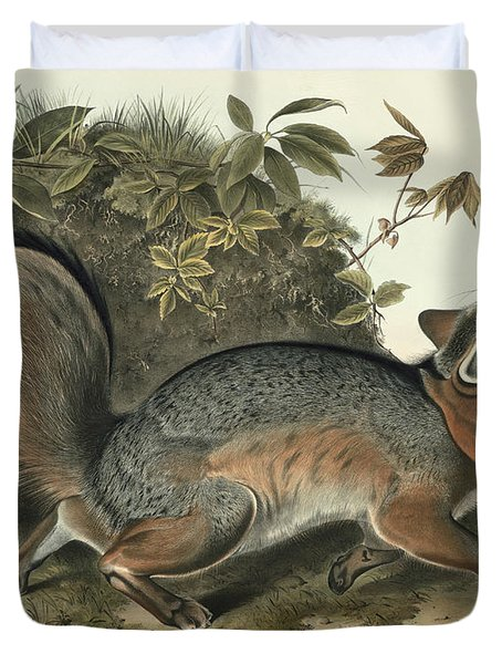 Grey Fox Duvet Cover by John James Audubon